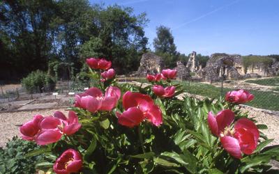 JARDIN DE PLANTES MEDICINALES DE L'ABBAYE DE VAUCLAIR